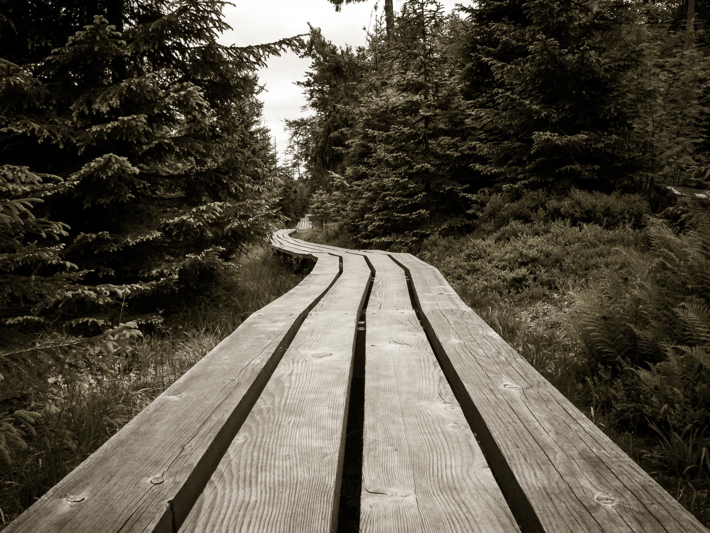 Holzweg durch den Wald