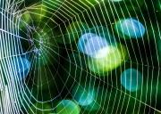 Spinnennetz mit Tautropfen 4