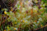 Spinnennetz mit Tautropfen 3