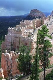 Bryce Canyon after a rainshower