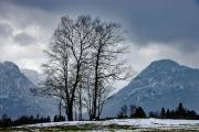 Baum und Berge