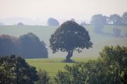 Wiesenlandschaft mit Baum